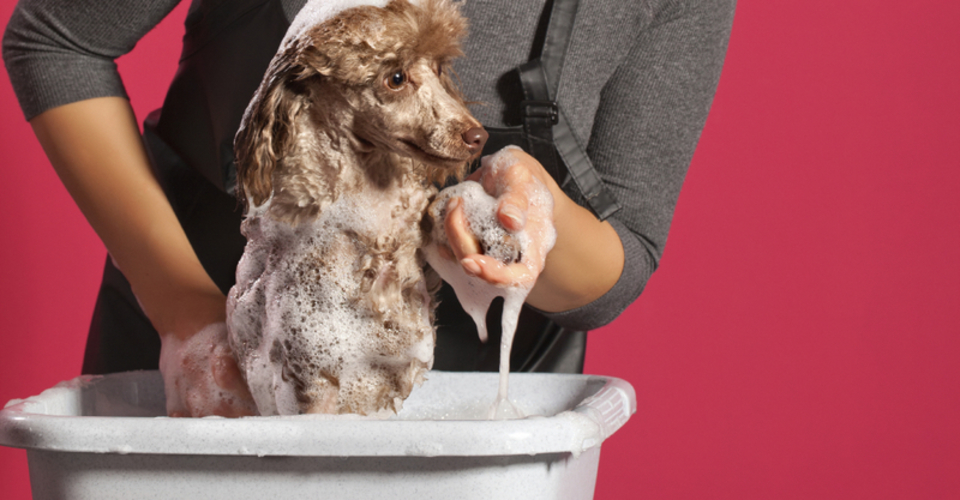 Doggy Stylz Grooming Helps Dogs In Lee S Summit Missouri